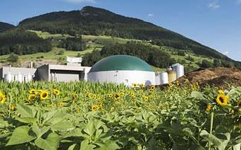 Institut für Biomasse und Ressourceneffizienz