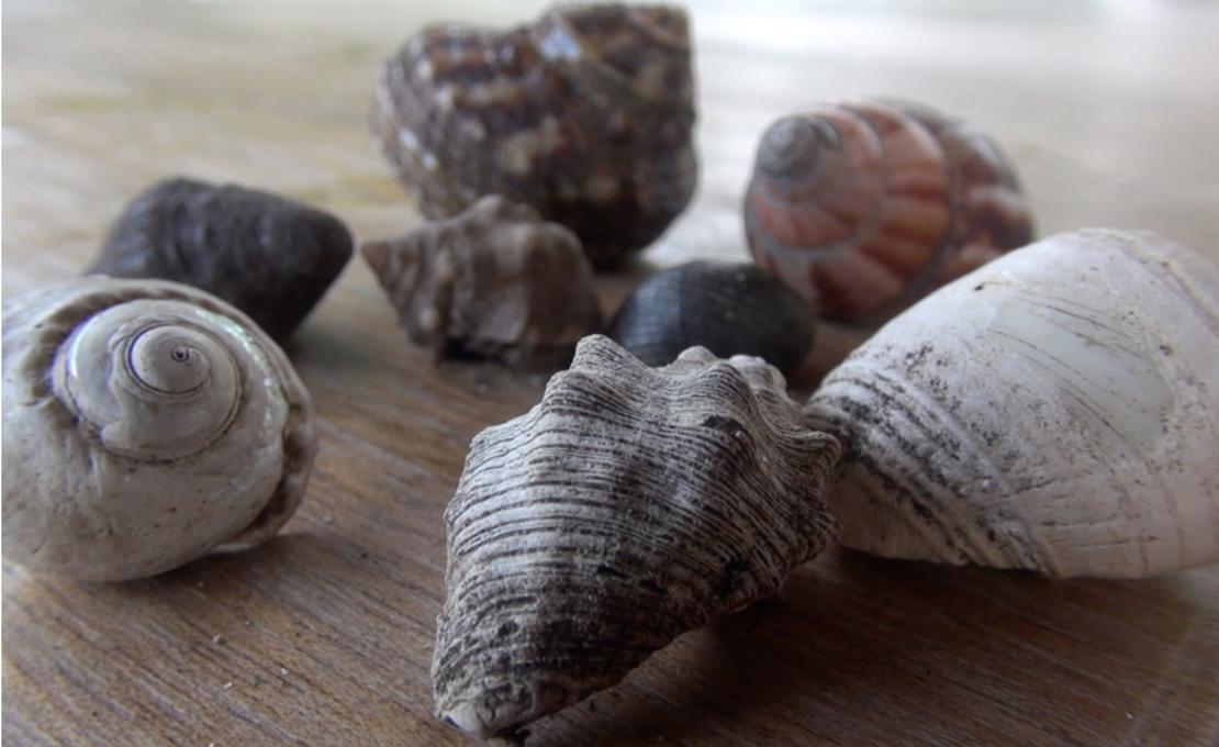 Sea Shell Collection, Videostill
