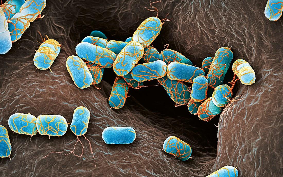 Bakterien Superresistenz 2.jpg