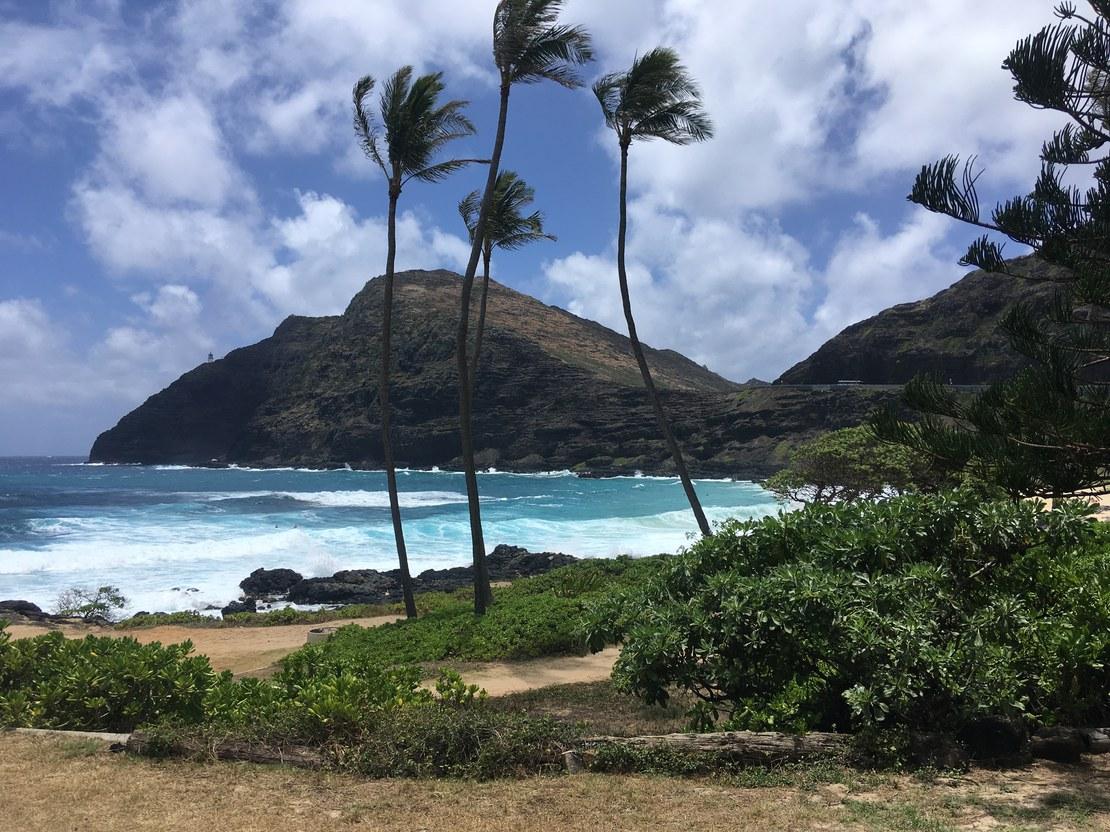 HLS-Hawaii-gross-4.jpg