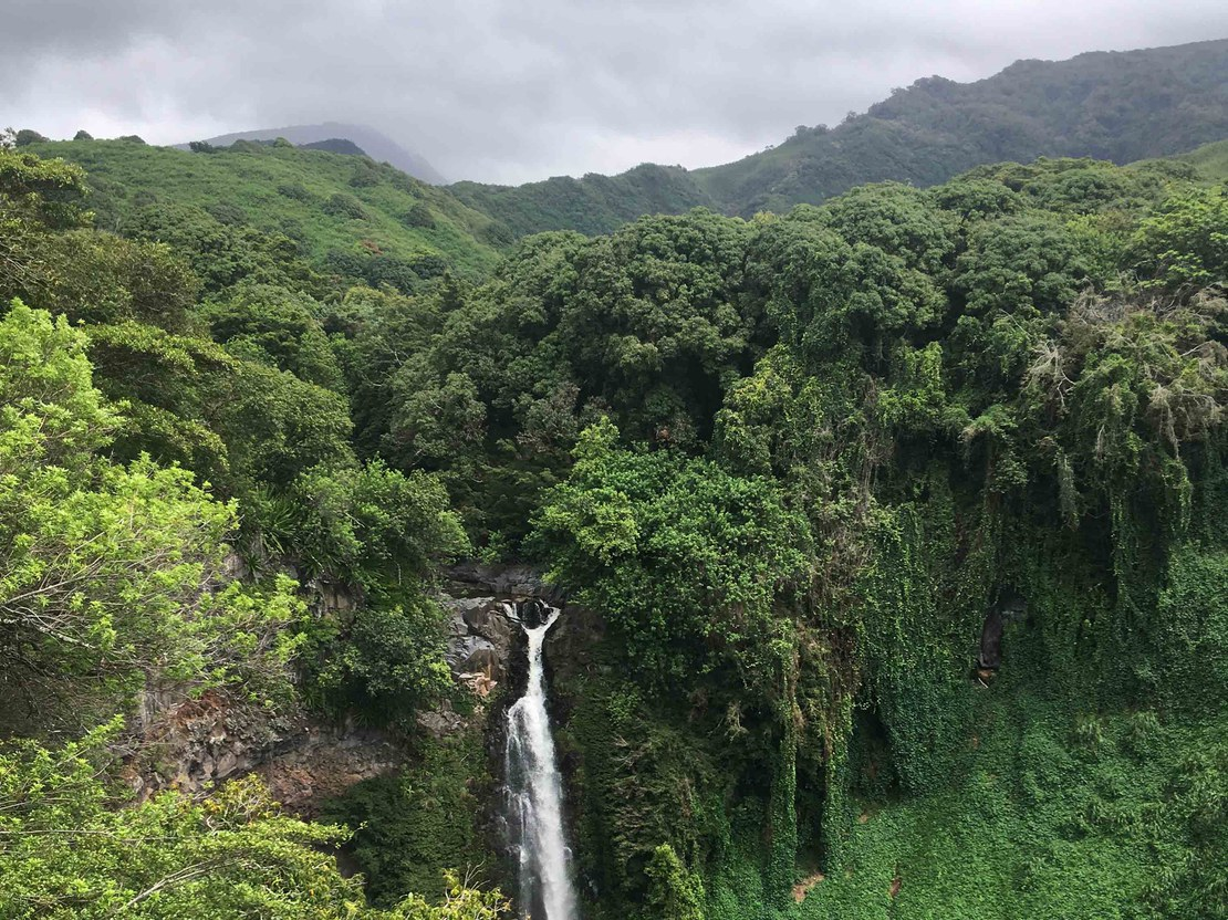 HLS-Hawaii-gross-6.jpg