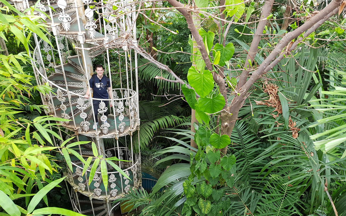Marvin_Wyss_Inside a Greenhouse at Royal Botanic Gardens.png