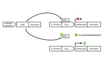 DNA and RNA Diagnostics