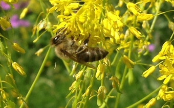 Effects of plant protection products on honey bees
