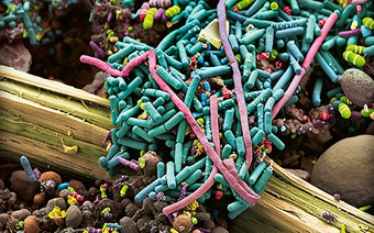Bacterial super-resistance decoded